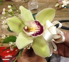 Green cymbidium orchid corsage - OXANA - great for mom to wear to church on Mother's day. Orchid Corsages, Cymbidium Orchids, Floral Event Design, Bridezilla, Special Day, White Flowers, Wedding Flowers, Mom, Bliss