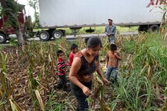 Biofuel expansion has contributed to spikes in food prices and a shortage of farmland; both are felt keenly in Guatemala, with its corn-based diet and land owned by a handful of families.