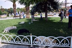 Sultanahmet, Istanbul. Dogs sleeping in the grass.