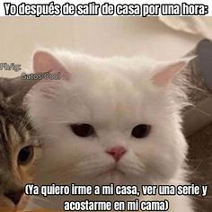 Gatos Cool, Cats, Animals, Gatos, Animales, Animaux, Animal, Cat, Animais
