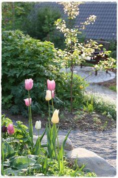 Plants, Garden, Home And Garden, Spring