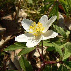 Lužní les na jaře skýtá půvabnou atmosféru probouzející se přírody, barev a vůní. Pojďme se podívat, co v něm můžeme spatřit. Plants, Plant, Planets