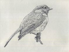 Chickadee bird drawing | M. Lewandowski