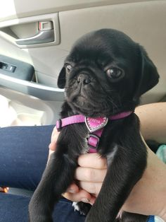 Things that make you go AWW! Like puppies, bunnies, babies, and so on. A place for really cute pictures and videos! Top Funny, Hilarious, Cute Puppies, Funny Humor, Funny Stuff, Pugs, Cute Pictures, French Bulldog, Crazy Humor