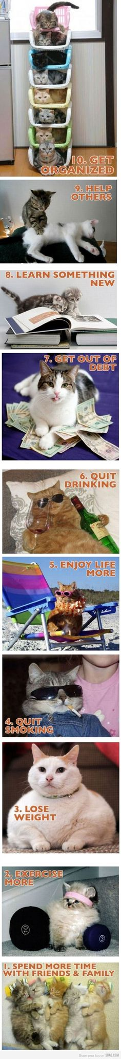 new years resolutions, cats style