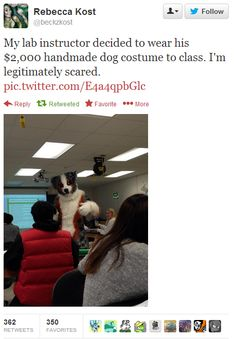 johnthemod1:juturnaway:  strigays:  muscleluvr2:  this is a 2000 dollar fursuit  honey your teacher is a furry  lab instructor by day, lab instructor by night   NO