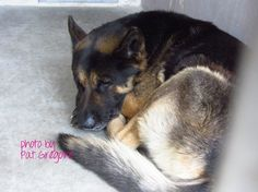 HELP!!!  Handsome German shepherd waits for an owner who is not coming.  THIS BOY NEEDS A HERO!!!  Baldwin Park, CA
