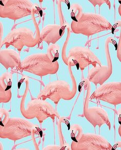 A Flamboyance of Flamingos - Wallpaper - Snuugle More