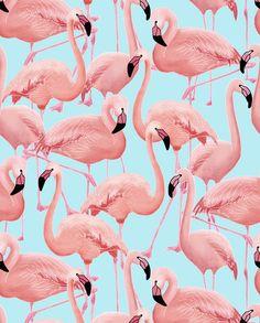 A Flamboyance of Flamingos - Wallpaper - Snuugle                                                                                                                                                     More
