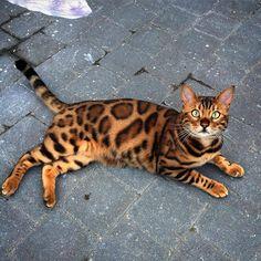 Cute or no?  . Follow  @arts.select @arts.select  @arts.select @arts.select -  By @bengalthor .  #animals #animal #animali #animales #pets #pet #petstagram #nature #animaladdicts #puppysketch #instalove #meow #puppystagrams #adorable #wildlife #kittens #kitten #cutenessoverload #cats #petstagram #cat #dogsofinstagram #puppiesofinstagram #cutest #cute