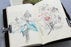 ? plant | by natalie_ratkovski