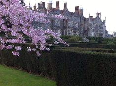 Eastwell Manor with blossom