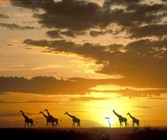 Masai Mara, Kenya