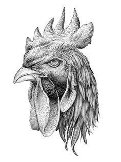 Pen & ink drawing - Daniella Valerio #Rooster