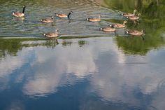 Zack Smith Photography North Carolina Brevard School of Music Center ducks pond…