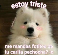 Reaction Pictures, Funny Pictures, Romantic Memes, Memes Lindos, Cute Love Memes, Love Phrases, Spanish Memes, Wholesome Memes, Mood Pics