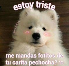 Romantic Memes, Memes Lindos, Ex Amor, Cute Love Memes, Tumblr Love, Love Phrases, Wholesome Memes, Meme Faces, Love Messages