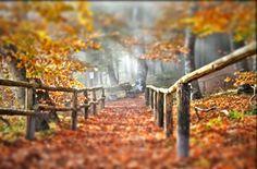herbstlicher wald Vineyard, Outdoor, Woodland Forest, Outdoors, Vine Yard, Vineyard Vines, Outdoor Games, The Great Outdoors