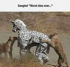 The Best Funny Pictures GIF and MEMES about Why you should never dress as zebra. Best MEME and GIFS about Why you should never dress as zebra and Funny Pictures Funny Cute, The Funny, Daily Funny, Worst Idea Ever, Zebra Costume, Haha, Darwin Awards, I Love To Laugh, Laughing So Hard