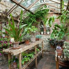Beautiful greenhouse filled with succulents and indoor plants
