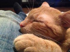 U pana najlepiej ;) #koty