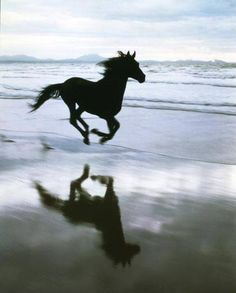 #horses on beach !