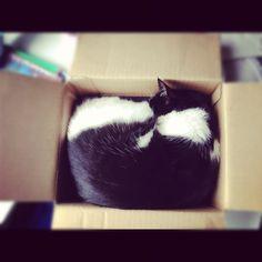 In a box.