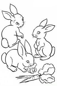 Ausmalbilder Kaninchen
