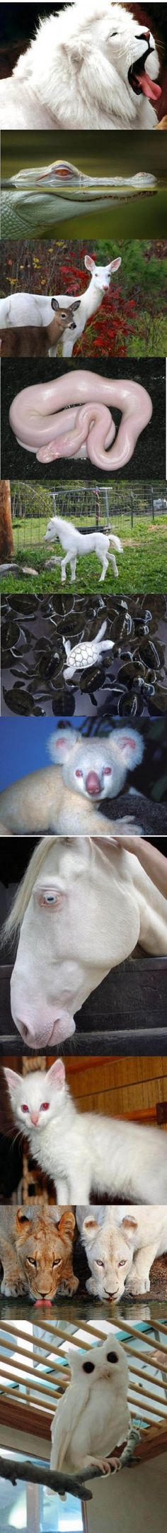 Just Some Albino Animals
