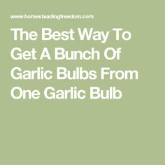 The Best Way To Get A Bunch Of Garlic Bulbs From One Garlic Bulb
