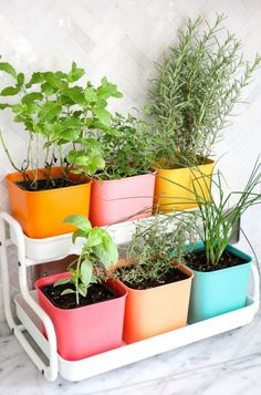 Make Your Own Colorful Indoor Herb Garden // IKEA hack counter too herb garden with paint