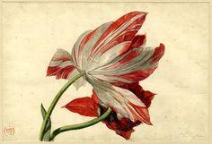 Мир голландского цветочного натюрморта.Амброзиус Босхарт Старший   Волшебная сила искусства