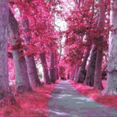 Image uploaded by Asha Moon Raven. Find images and videos about pink, tree and forest on We Heart It - the app to get lost in what you love. Pink Love, Pretty In Pink, Pretty Pics, Perfect Pink, Hot Pink, Ayurveda, Tout Rose, Pink Forest, Destinations