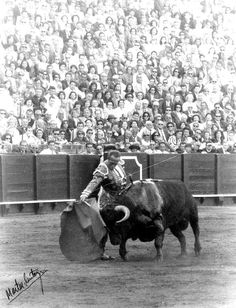 """El arte es un destello torero que queda en la retina.""  Curro Romero Cow, Moose Art, History, Painting, Animals, Retina, Hobbies, Sevilla, Antigua"