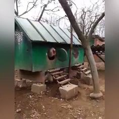 Video of Giant rooster.  His name is The Big Boss Race: Brahma Country: Kosovo Owner: Fitim Sejfijaj
