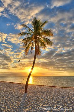 Actually reminds me of a tree we planted at the beach....except it was dead...and then my dad found a few dead eels and fish and strung them up too....it was actually pretty cool but not half as beautiful as this haha:)  Sunrise in Key West.