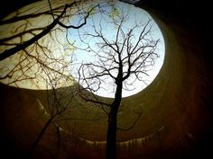 TREES GROWING IN SILOS // NATURE VS THE MANMADE