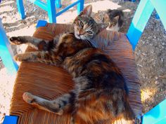 Cat on a straw chair | Cat lying down on a taverna's chair. Greece