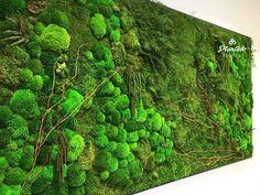 Rounding out the series! Happy Friday! #PlantedDesign #Art #PreservedMoss #MaintenanceFree #PlantPainting #LivingWall #MossWall #MossDesign #MossBoss #InsideSource #BayArea #InteriorDesign #VerticalGarden #LetUsPlantOneOnYou #InteriorDecor #LivingWallRental #RentMe #Sustainability #PlantLove #Ferns #FramedPlants #LivingWalls