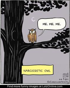 Narcissistic Owl...  OMG... dying laughing
