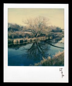 Wallace Polsom, Stillness (17 April 2016), instant photo taken with a vintage SX-70 Land Camera and Impossible Project SX-70 colour film. Photo was taken at about 6:30 pm in the Northern Hemisphere with the SX-70's lighten/darken control set one step darker.