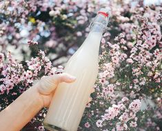 How To Make Gut-Friendly Coconut Water Kefir - The Chalkboard