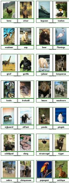 I love Animals😍❤ Preschool Jungle, Preschool Science, Zoo Animals, Animals And Pets, Dutch Language, Jungle Safari, Mundo Animal, Animal Cards, African Animals