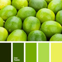 Colors That Match Green brown shades & color of pumpkin. - monochrome color palette