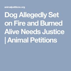 Dog Allegedly Set on Fire and Burned Alive Needs Justice | Animal Petitions