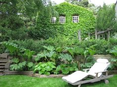 The garage/carriage house is thick with Boston ivy and other greenery, including a bed of Gunnera and Podophyllum in the sunken garden's old...