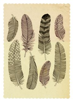 "Coloured Feathers    Art Print / MINI (8"" x 10"")    $20.00"