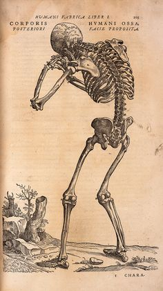Picture library captures Royal Society's rich history Illustration from De Humani Corporis Fabrica by Andreas Vesalius, first published in 1543 Andreas Vesalius, Éphémères Vintage, Vintage Ephemera, Dance Of Death, Anatomy Drawing, Anatomy Art, Human Anatomy, Memento Mori, Illustrations Médicales