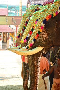Festival #Kerala #India