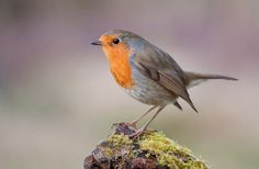 450 Bird Names The A Z Of Best Names For Birds My Pet S Name Pet Names Bird Breeds Cool Names